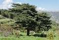 20110511_Turkey_151733_CR